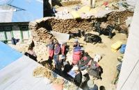 orters, trekkers and yaks mingle in Namche Bazaar
