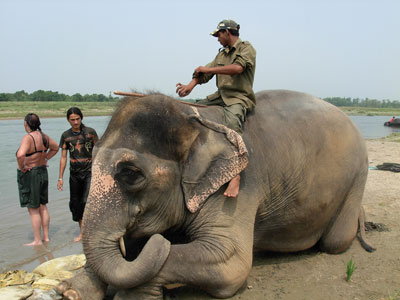 Chitwan National Park - Elephant Jungle Safari